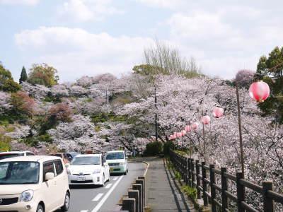 菊池公園、菊池神社の桜photoコレクション 2019_a0254656_19291241.jpg