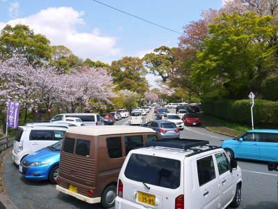 菊池公園、菊池神社の桜photoコレクション 2019_a0254656_19302740.jpg