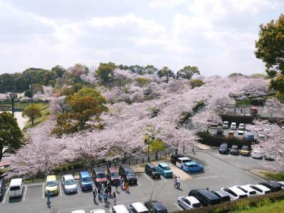 菊池公園、菊池神社の桜photoコレクション 2019_a0254656_19342766.jpg