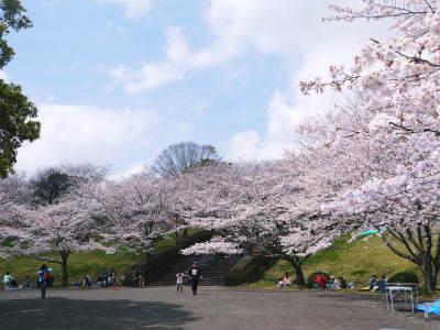 菊池公園、菊池神社の桜photoコレクション 2019_a0254656_19370464.jpg