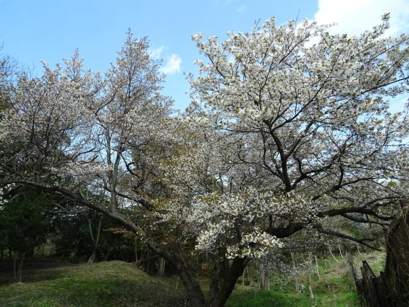 お花見弁当・・・うみべの森_c0108460_18290284.jpg