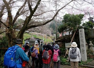 お花見ウォーキング~高野山黒河道_b0194861_20003817.jpg