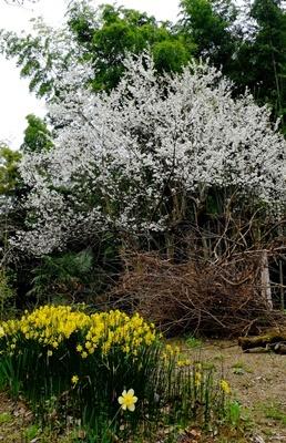 お花見ウォーキング~高野山黒河道_b0194861_20014744.jpg