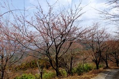 お花見ウォーキング~高野山黒河道_b0194861_20020537.jpg