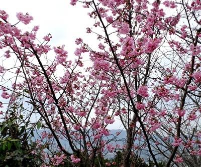 お花見ウォーキング~高野山黒河道_b0194861_20040127.jpg