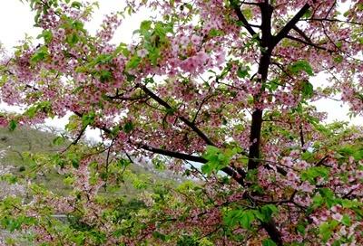 お花見ウォーキング~高野山黒河道_b0194861_23051375.jpg