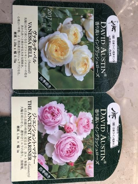 バラのガゼボを囲うレンガ道にバラ苗「ヴァネッサ・ベル」「ジ・エンシェント・マリナー」を植えました_a0243064_16345668.jpg