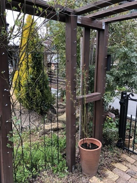バラのガゼボを囲うレンガ道にバラ苗「ヴァネッサ・ベル」「ジ・エンシェント・マリナー」を植えました_a0243064_16502590.jpg