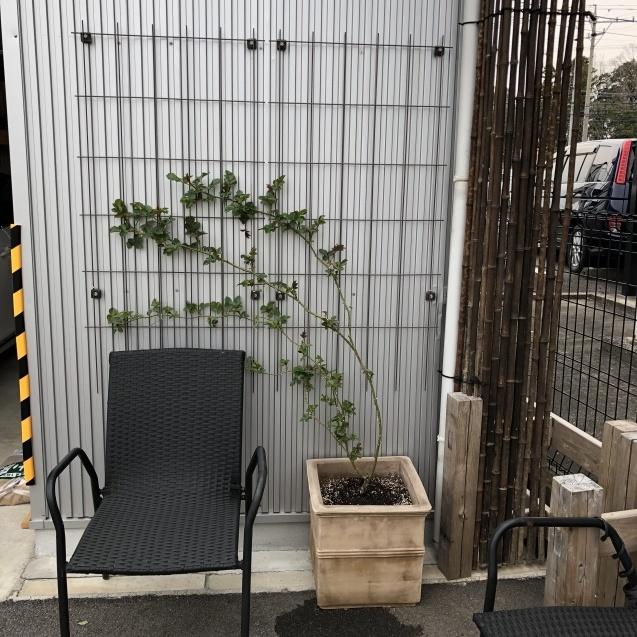 バラのガゼボを囲うレンガ道にバラ苗「ヴァネッサ・ベル」「ジ・エンシェント・マリナー」を植えました_a0243064_16530254.jpg