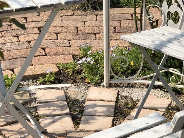 バラのガゼボを囲うレンガ道にバラ苗「ヴァネッサ・ベル」「ジ・エンシェント・マリナー」を植えました_a0243064_17171676.jpg
