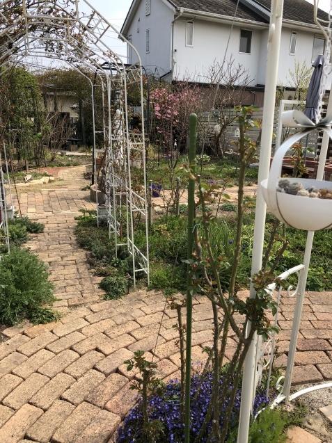 バラのガゼボを囲うレンガ道にバラ苗「ヴァネッサ・ベル」「ジ・エンシェント・マリナー」を植えました_a0243064_17210540.jpg