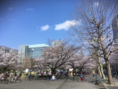 桜満開!_b0219170_13413774.jpeg