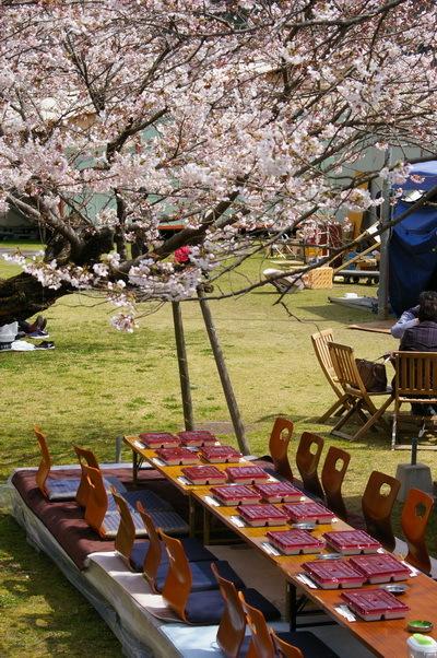 錦帯橋の桜_d0327373_17041091.jpg