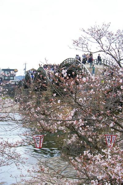 錦帯橋の桜_d0327373_17043593.jpg