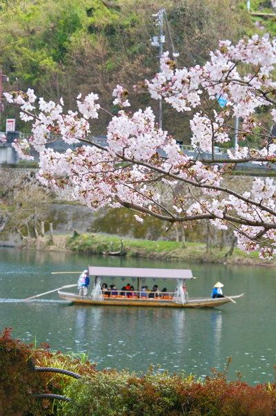 錦帯橋の桜_d0327373_17060728.jpg