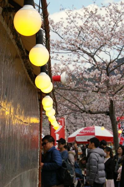 錦帯橋の桜_d0327373_17061682.jpg