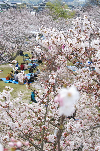 錦帯橋の桜_d0327373_17153444.jpg