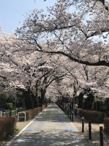お花見 in 東京!_a0289775_18052171.jpg