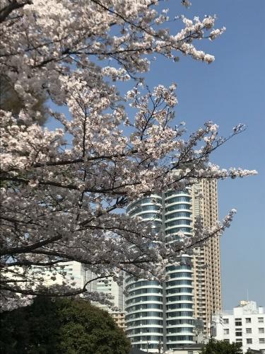 お花見 in 東京!_a0289775_18060522.jpg