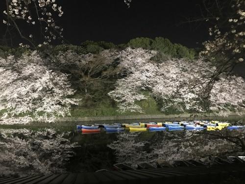 お花見 in 東京!_a0289775_18340366.jpg