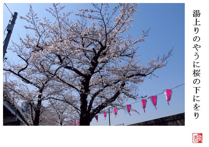 湯上りのやうに桜の下にをり_a0248481_21484424.jpg
