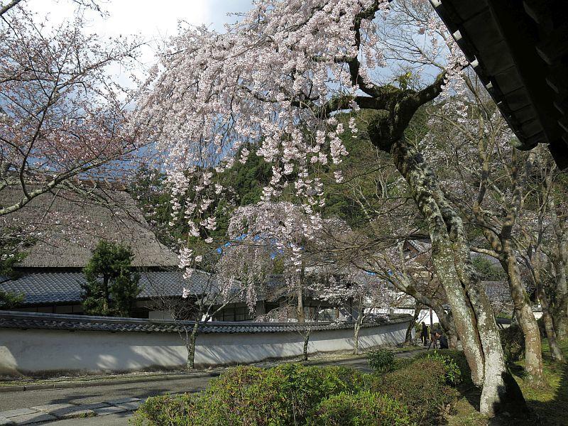 190331天野山金剛寺までウォーキング_d0036883_20191866.jpg