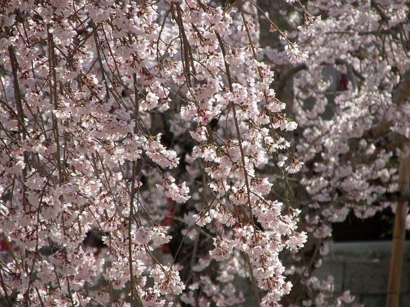 190331天野山金剛寺までウォーキング_d0036883_20192980.jpg