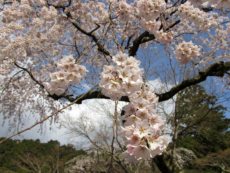 190331天野山金剛寺までウォーキング_d0036883_20204202.jpg