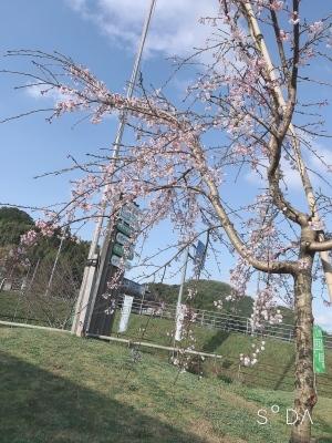 お花見シーズンですね!_a0171984_18442041.jpeg