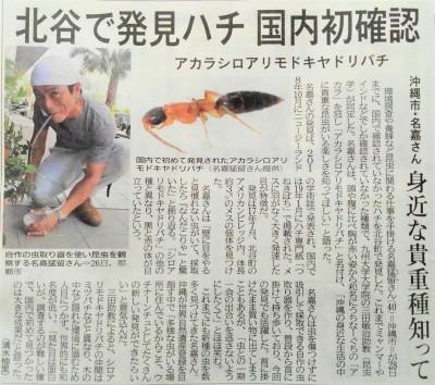 北谷の美浜で日本初記録のハチを見つけました。アカラシロアリモドキヤドリバチ。_a0247891_00492601.jpg