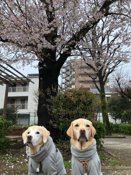 桜とパチリ♪_c0028792_22162519.jpg