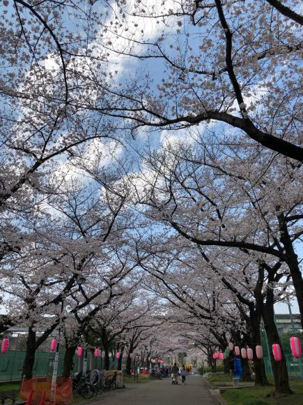 桜とパチリ♪_c0028792_22210635.jpg