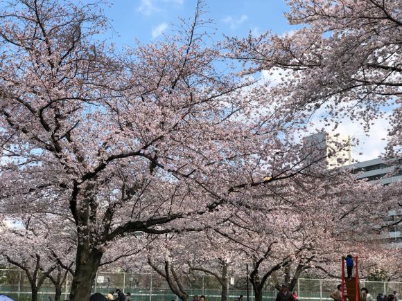 桜とパチリ♪_c0028792_22210820.jpg