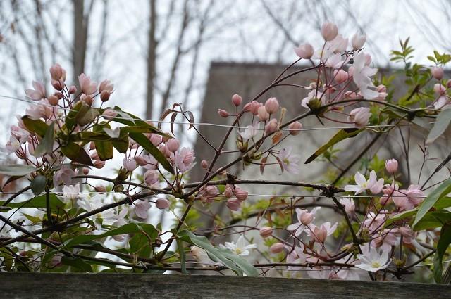 3月29・31日の庭 前編。_c0124100_14084902.jpg