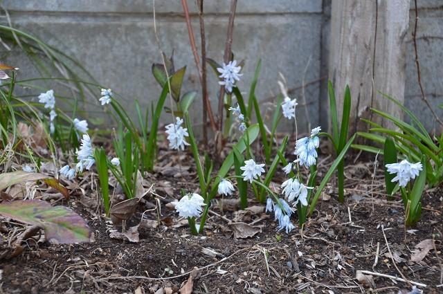 3月29・31日の庭 後編。_c0124100_14333443.jpg
