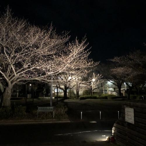 『夜桜カフェ』リベンジ開催決定!_a0322702_11072779.jpeg