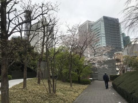 マンションの桜・桜・桜・・・_d0054704_21554492.jpg