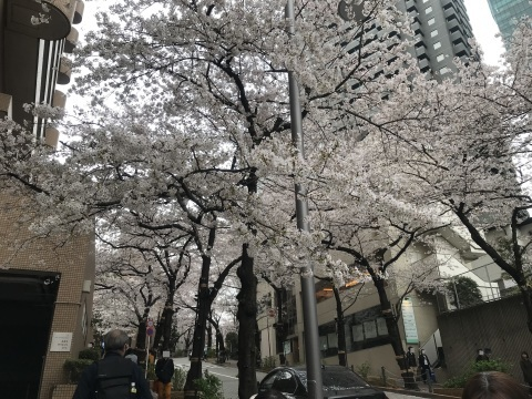 アークヒルズ桜散歩_d0054704_22130511.jpg