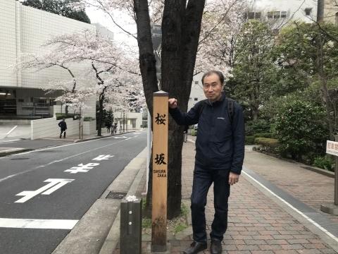 アークヒルズ桜散歩_d0054704_22255346.jpg