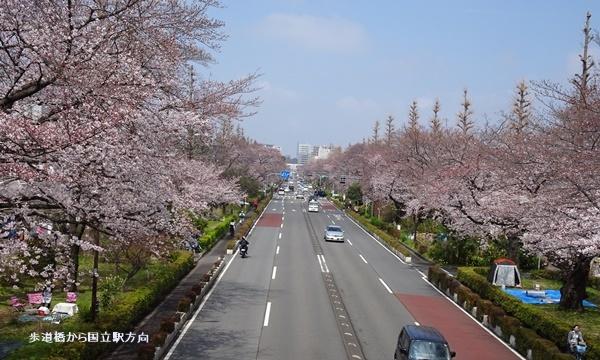 春うらら、国立・立川さくらウォーキングへ_c0051105_00053594.jpg