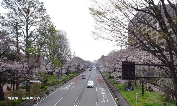 春うらら、国立・立川さくらウォーキングへ_c0051105_00081325.jpg