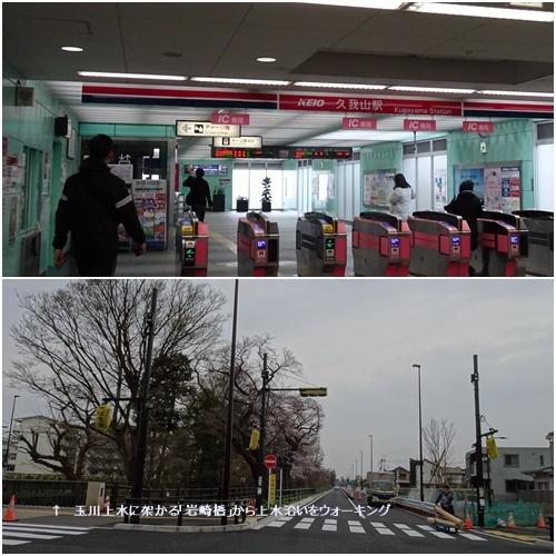 桜を見ながら 玉川上水を歩く(最終章)_c0051105_17101011.jpg