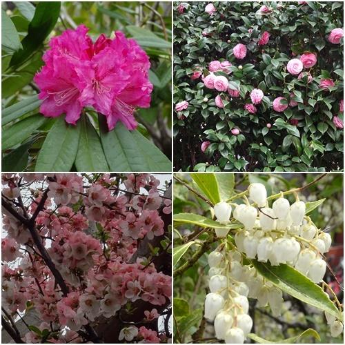桜を見ながら 玉川上水を歩く(最終章)_c0051105_17292465.jpg