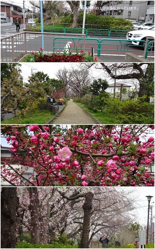 桜を見ながら 玉川上水を歩く(最終章)_c0051105_20433437.jpg