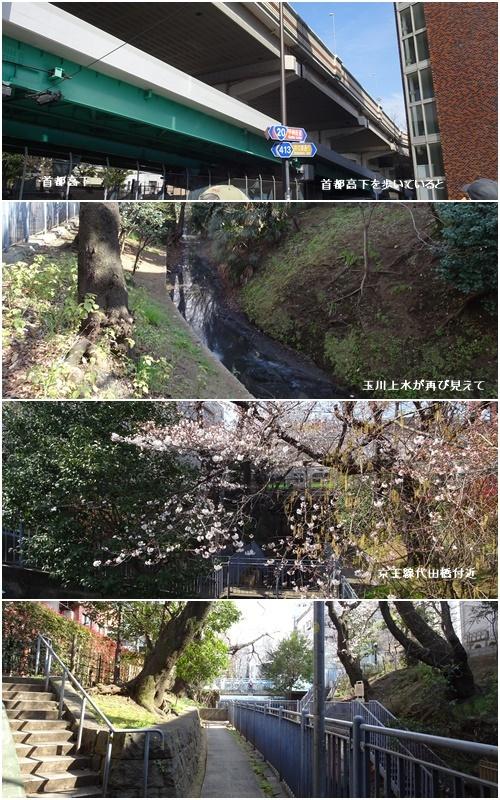 桜を見ながら 玉川上水を歩く(最終章)_c0051105_22572690.jpg