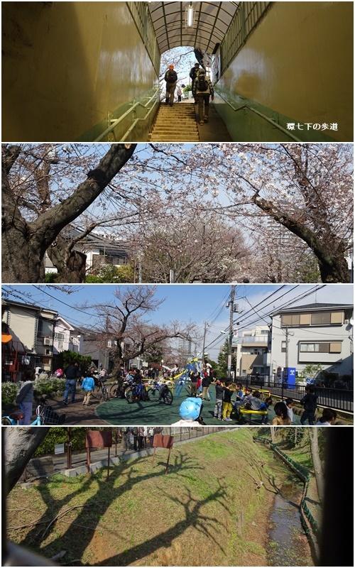桜を見ながら 玉川上水を歩く(最終章)_c0051105_23132632.jpg