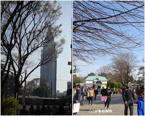 桜を見ながら 玉川上水を歩く(最終章)_c0051105_23573891.jpg