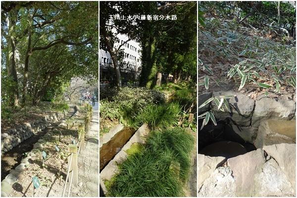 桜を見ながら 玉川上水を歩く(最終章)_c0051105_23580671.jpg