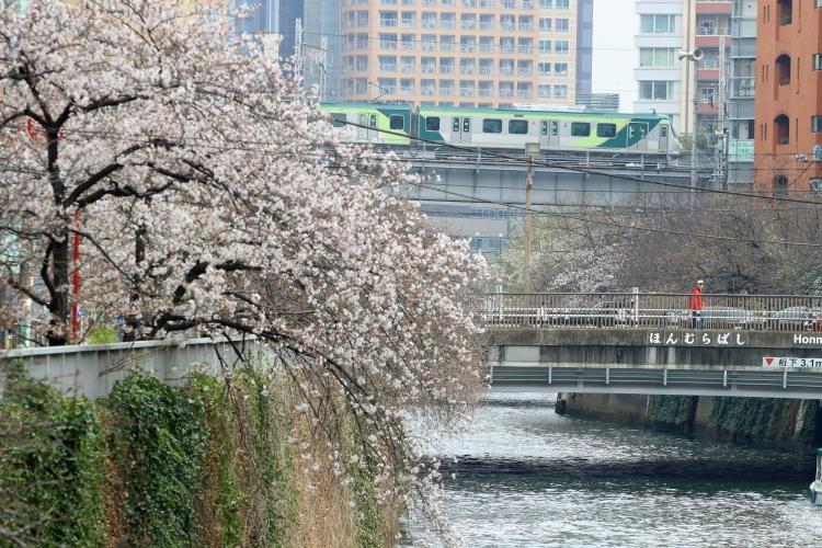 桜咲くの日の目黒川散歩_b0190710_23384401.jpg