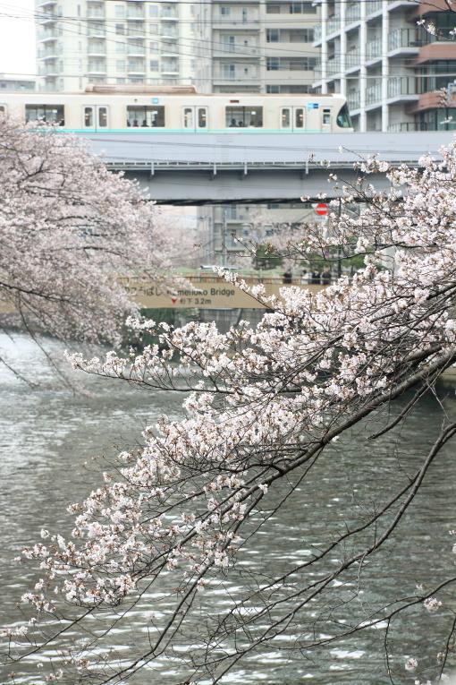 桜咲くの日の目黒川散歩_b0190710_23384502.jpg